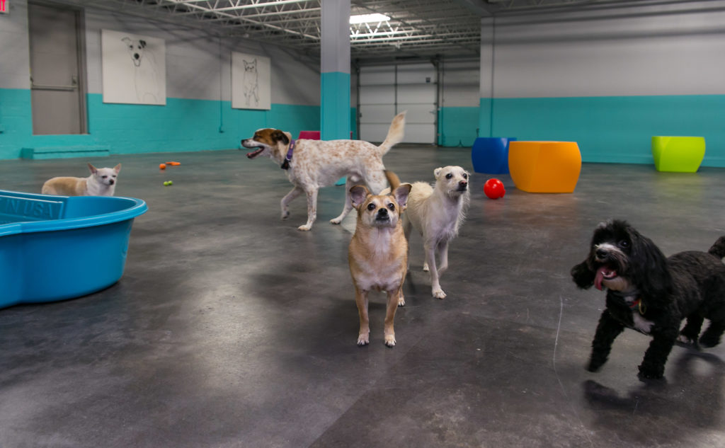 Multiple dogs Club DiOGi 1