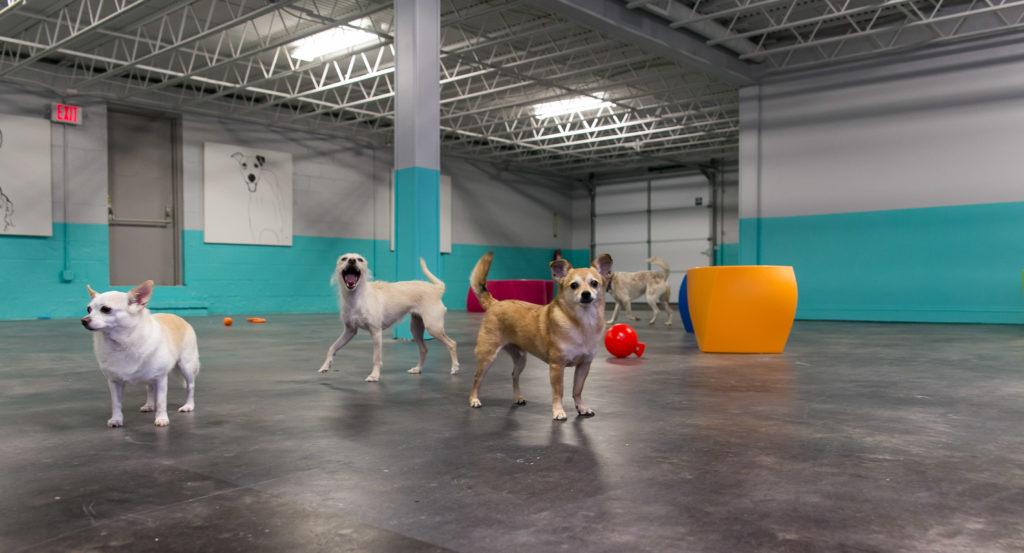 Multiple dogs Club DiOGi 2